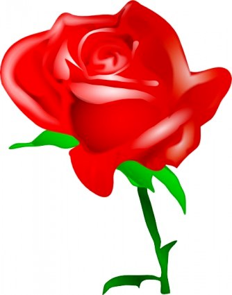 red rose clip art 11538
